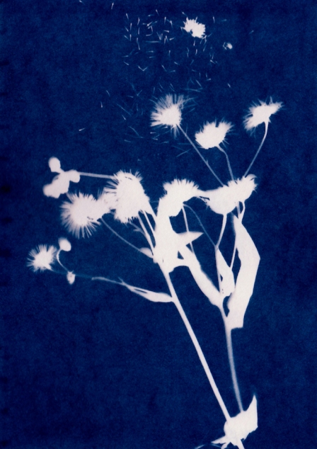 GS-cyanotypes-9